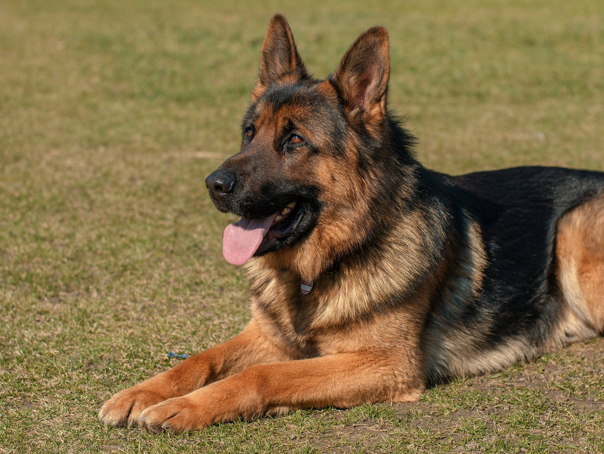 Guard Dogs Business Protection