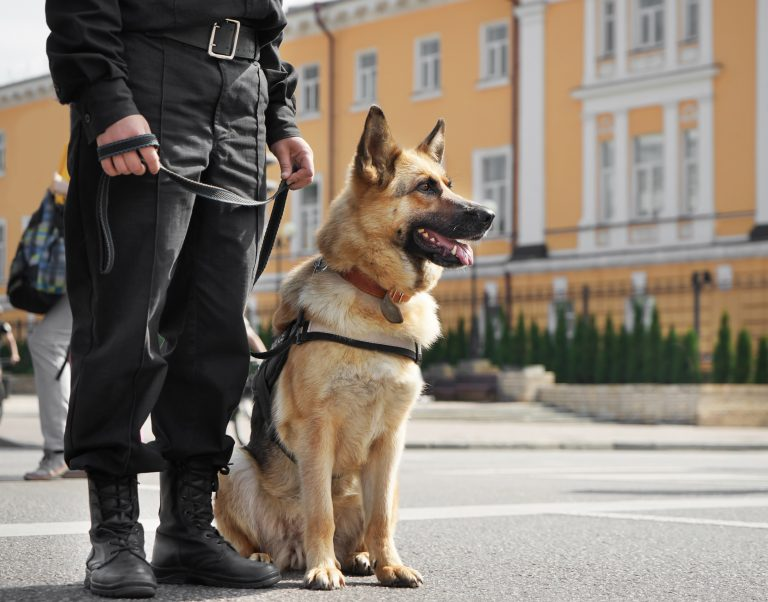 Guard Dog Security Services | Guard Dog Security