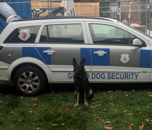 Construction Site Dog Guarding Sussex